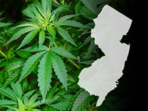 new-jersey-weed