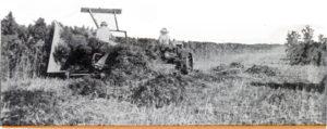 Hemp-Harvest